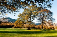 Trees-and-Coniston-Old-Man.jpg