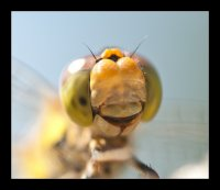 dragonfly dude | Photography Forum